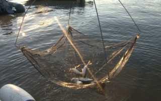 Ловля рыбы на экран: рыболовный телевизор, техника ловли
