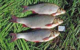 Раскроем секреты рыбалки спиннингом на озере и в пруду