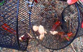 Ловля раков: способы ловли, снасти для ужения раков