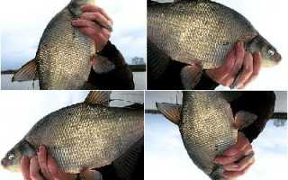 Ловля леща на спиннинг — Про рыбалку