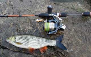 Ловля голавля на спиннинг — читайте на Сatcher.fish