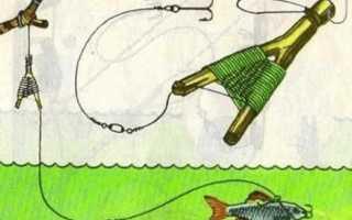 Ловля судака на живца с берега, оснастка для лета и осени