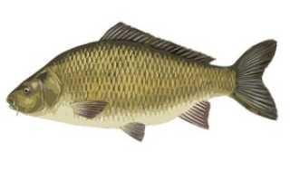 Рыбалка осенью: Ловля щуки осенью, ловля карпа осенью и ловля карася