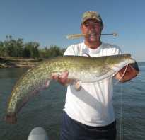Ловля сома на квок — читайте на Сatcher.fish