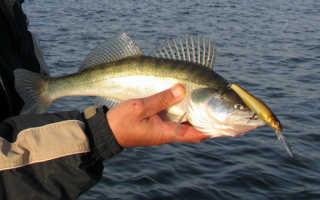 Ловля судака на Оке — Охота и рыбалка в России и за рубежом