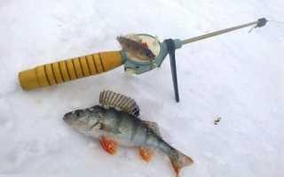 Ловля окуня на блесну зимой: как правильно ловить крупного полосатого по первому льду, тактика и секреты