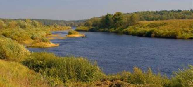 Рыбинское водохранилище летом: рыбалка на реке Ухра