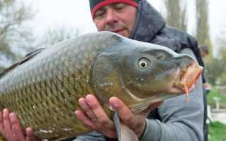 Новые правила любительского рыболовства 2018