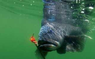 Рыбалка на море с берега Морская береговая ловля Обзор