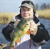 Озеро коряжник в рузском районе рыбалка