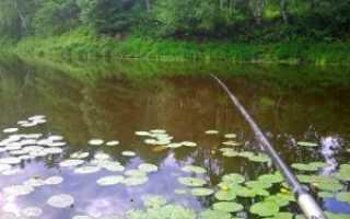 Рыбалка на Клязьминском водохранилище ловля леща плотвы окуня и щуки