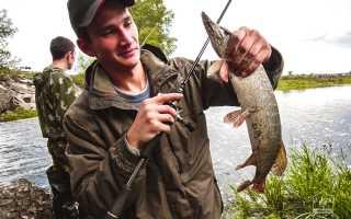 Ловля на неогруженную резину: ловим щуку и окуня