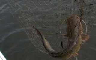 Ловля сома в сентябре — читайте на Сatcher.fish