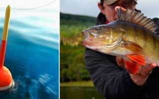 Ловля окуня на поплавочную удочку: на червя и малька