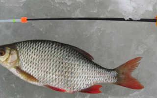 Мормышка на красноперку — Про рыбалку