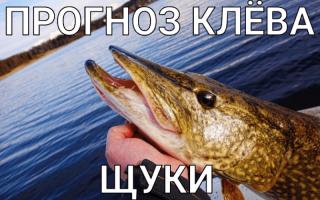 Прогноз клёва рыбы в селе Павловка