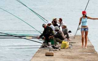 Ловля судака на кружки — Здесь рыба
